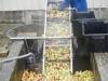 11on-trie-et-on-lave-les-pommes