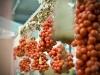 tomates-grappes-du-vesuve