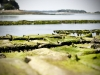 bancs-d-huitres-sur-la-ria-etel-listrec