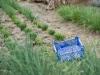 jardin-baron-lefevre-herbes-aromatiques