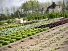 jardin-potager-nantais-baron-lefevre