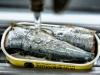 sardines-la-quiberonnaise-14