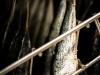 sardines-la-quiberonnaise-7