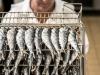 sardines-la-quiberonnaise-8