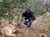 le-labrador-vient-de-marquer-les-truffes