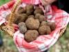 panier-de-truffes