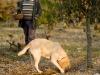 le-chien-marque-les-truffes