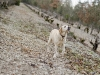 le-labrador-renifle-les-truffes