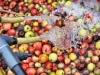 10lavage-des-pommes-coat-albret
