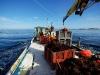 Les-algues-sont-pretes-pour-nourrir-les-ormeaux-en-mer